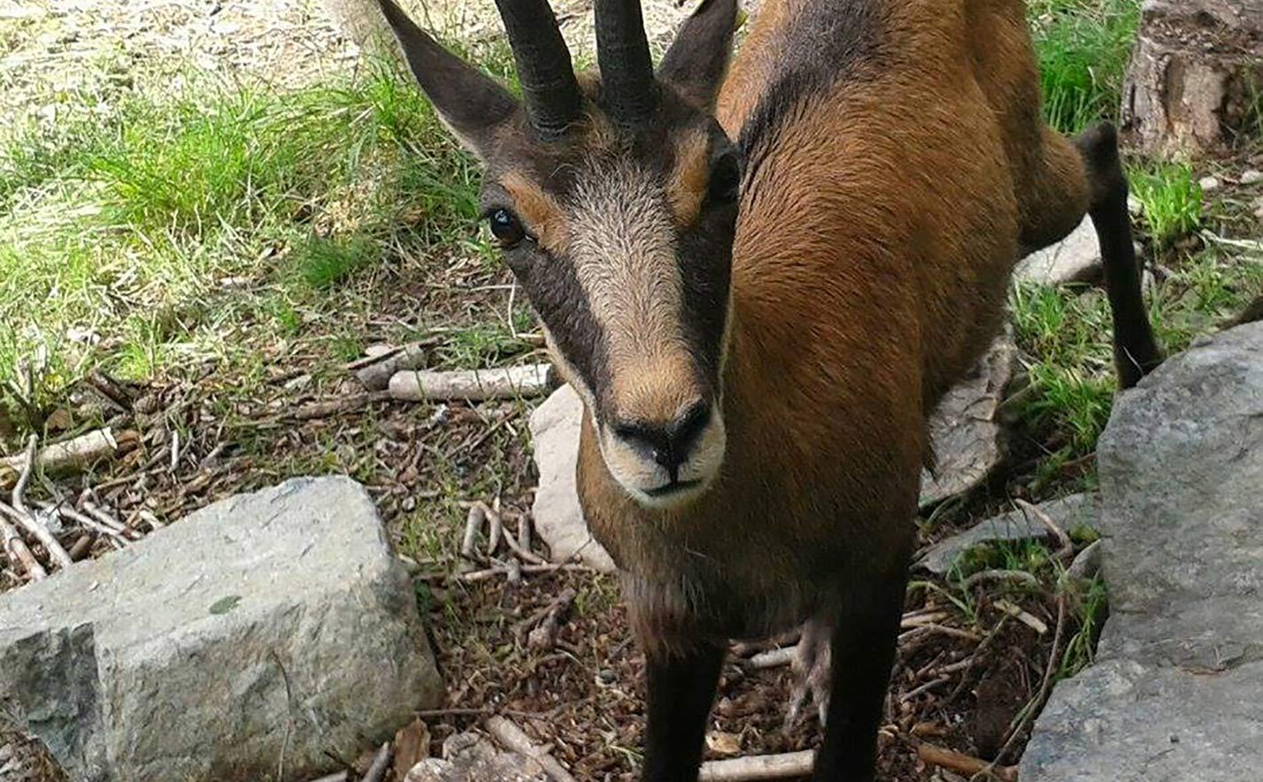Parc animalier Valle d'Aosta